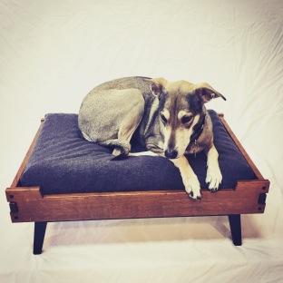 The original shy dog, Fern, in her custom dog bed